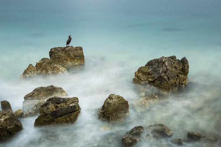 künstlerische Fotografie von einem Seevogel, der auf einem Felsen im tuerkisfarbenen Meer sitzt